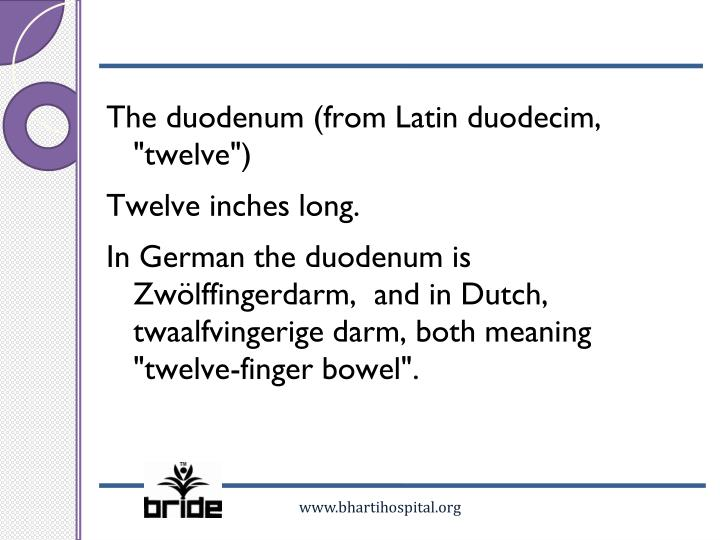 "The duodenum (from Latin duodecim, ""twelve"")"