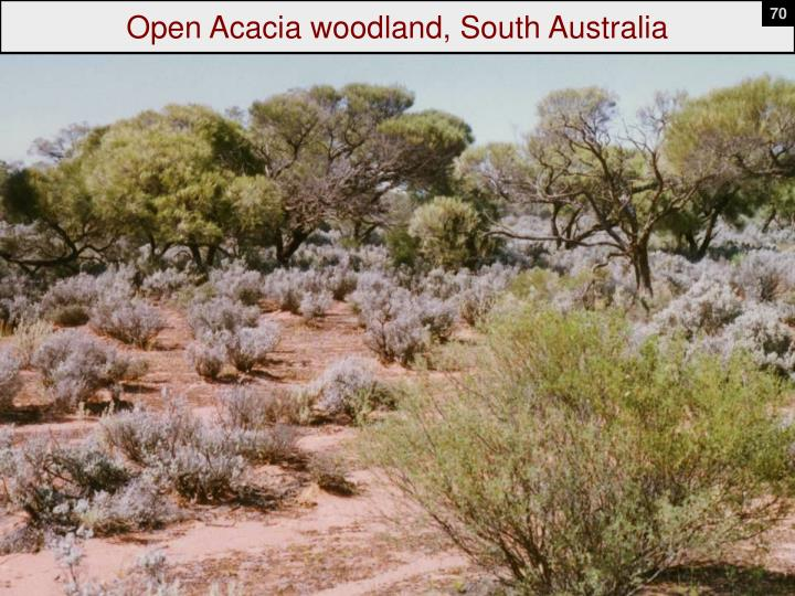 Open Acacia woodland, South Australia