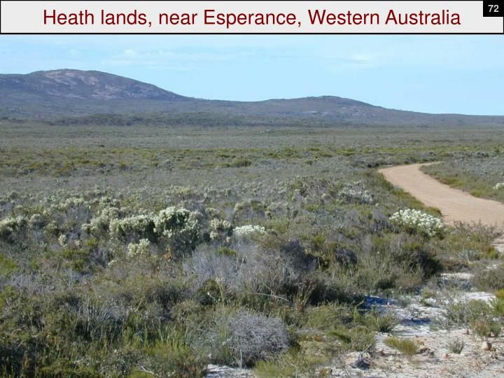 Heath lands, near Esperance, Western Australia