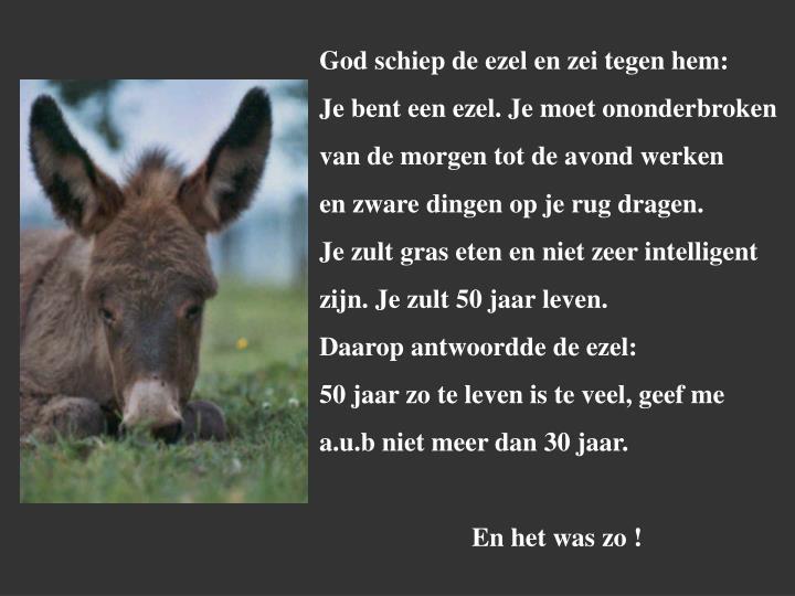 God schiep de ezel en zei tegen hem: