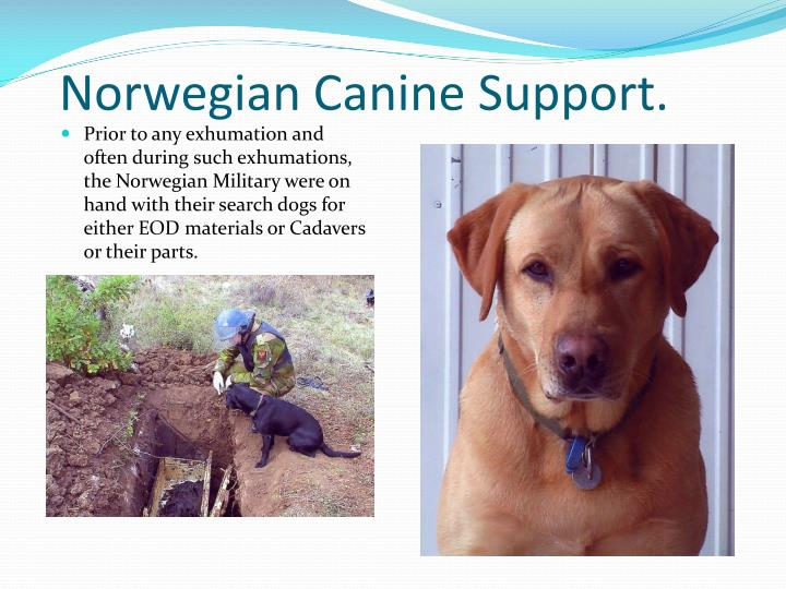 Norwegian Canine Support.
