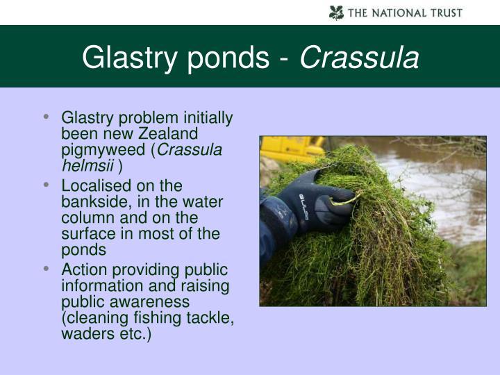 Glastry ponds -
