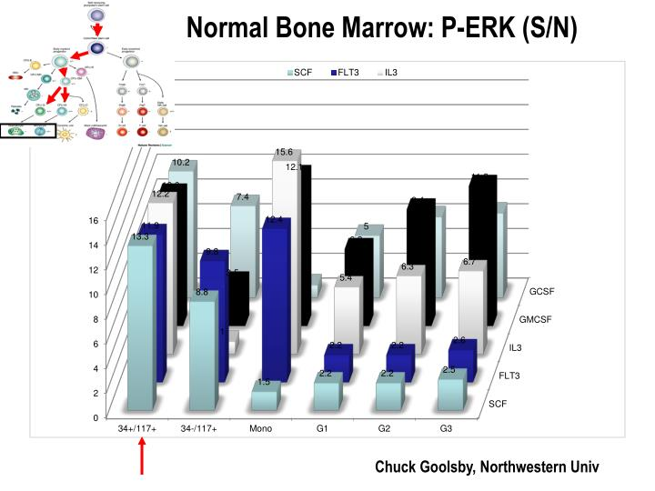 Normal Bone Marrow: P-ERK (S/N)