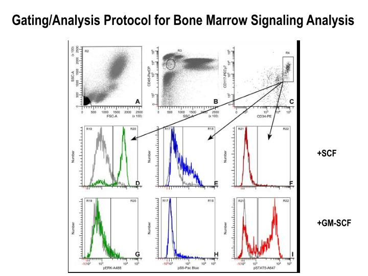 Gating/Analysis Protocol for Bone Marrow Signaling Analysis