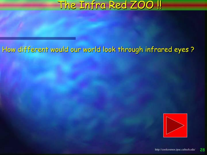 The Infra Red ZOO !!