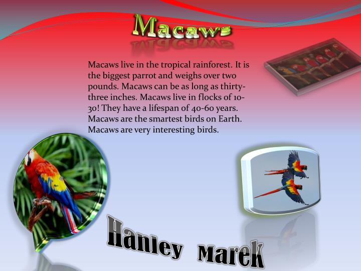 Macaws