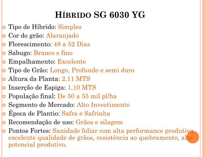 Híbrido SG 6030 YG