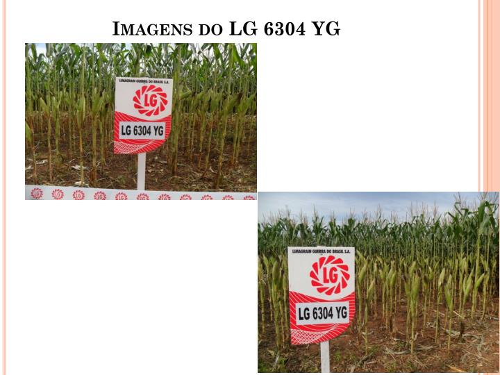 Imagens do LG 6304 YG