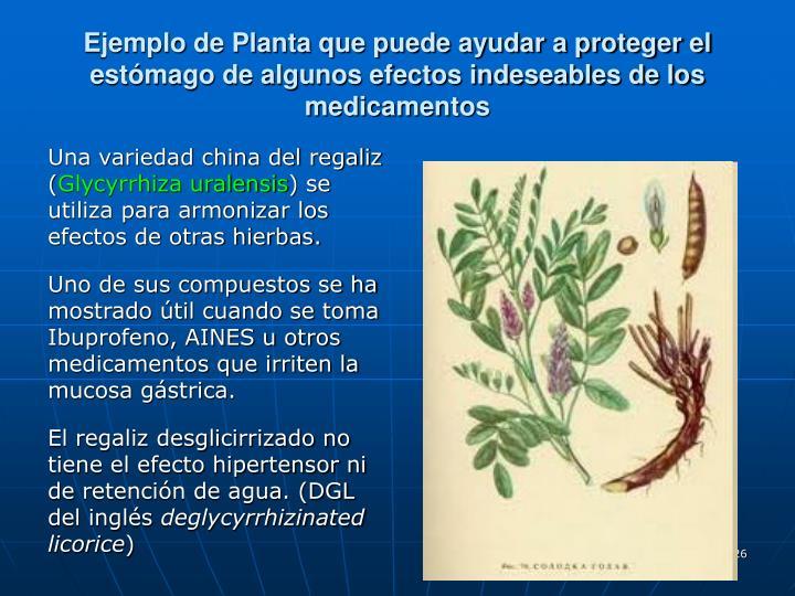 Ejemplo de Planta que puede ayudar a proteger el estómago de algunos efectos indeseables de los medicamentos