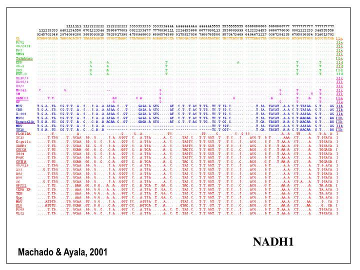 NADH1