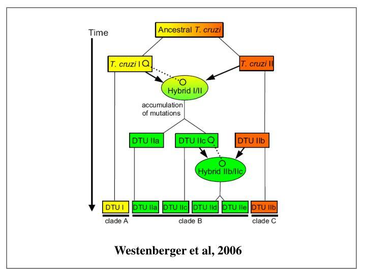 Westenberger et al, 2006