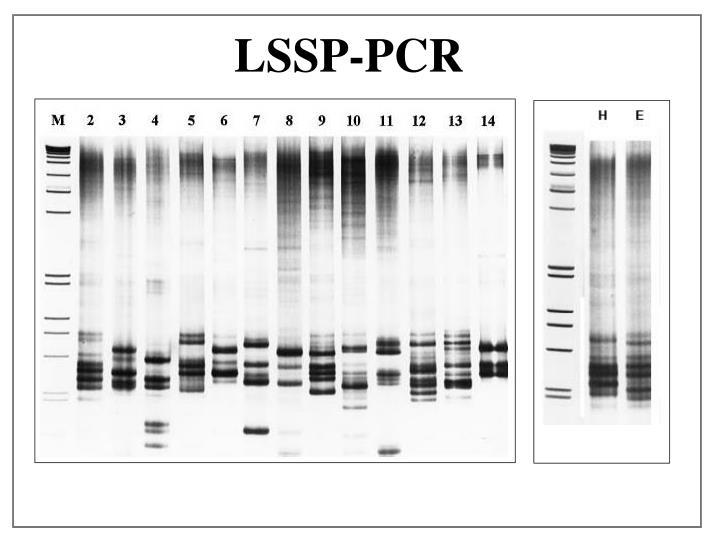 LSSP-PCR