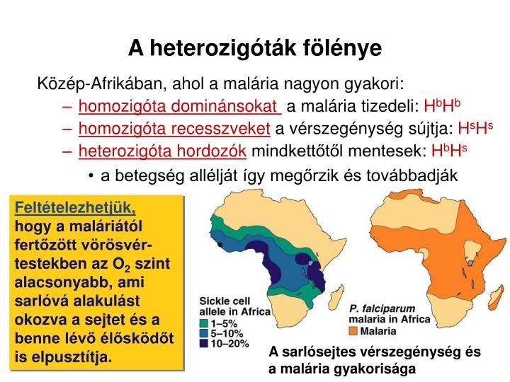 A heterozigóták fölénye