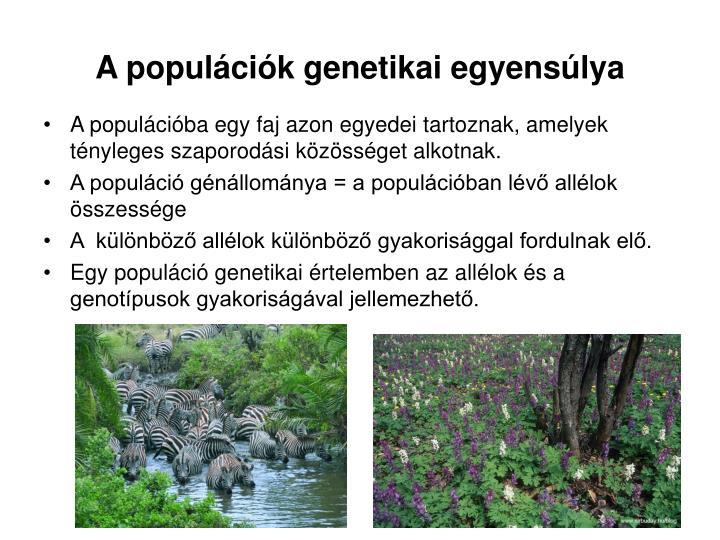 A populációk genetikai egyensúlya