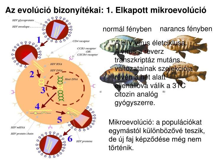 Az evolúció bizonyítékai: 1