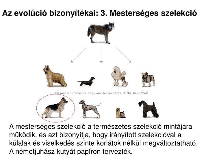 Az evolúció bizonyítékai: 3