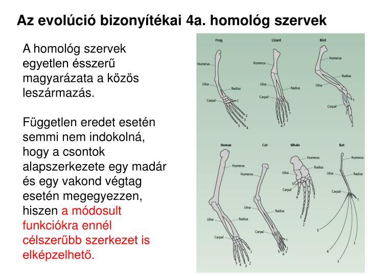 Az evolúció bizonyítékai 4a. homológ szervek