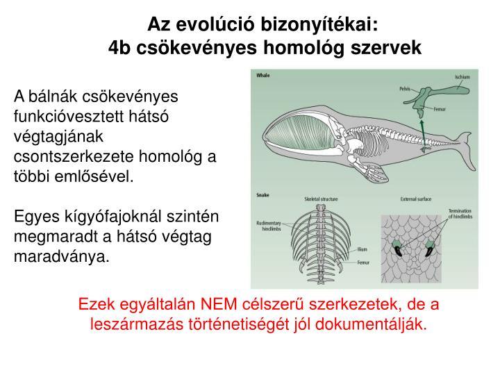 Az evolúció bizonyítékai: