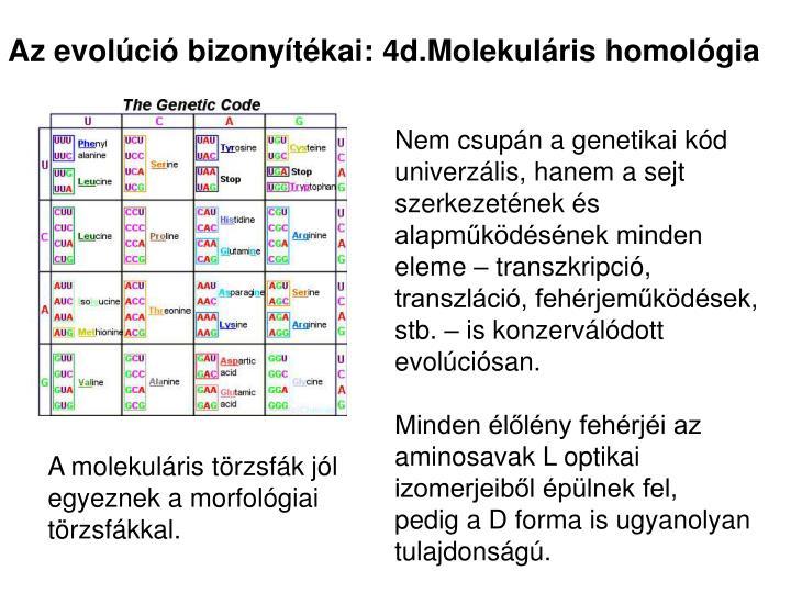 Az evolúció bizonyítékai: 4d.Molekuláris homológia
