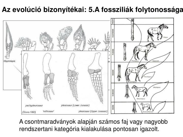 Az evolúció bizonyítékai: 5.A fossziliák folytonossága