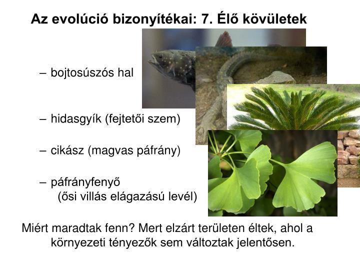 Az evolci bizonytkai: 7. l kvletek