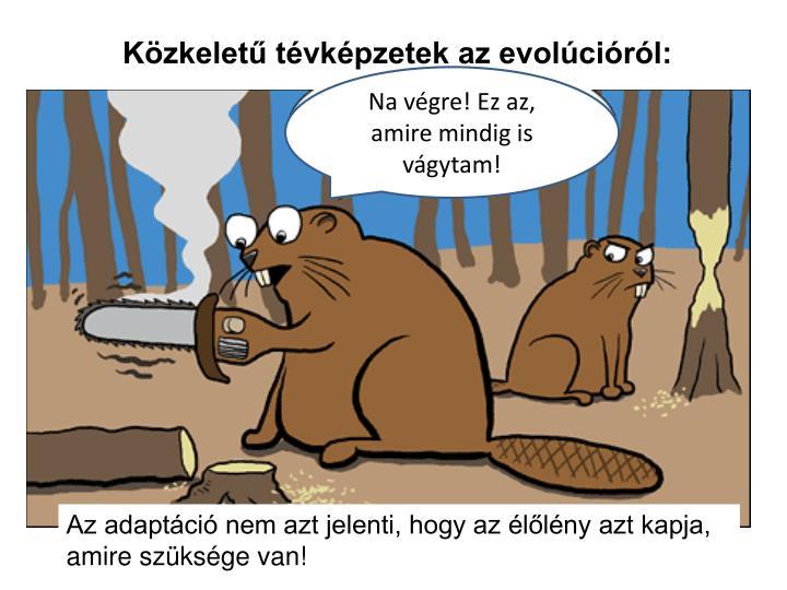 Közkeletű tévképzetek az evolúcióról: