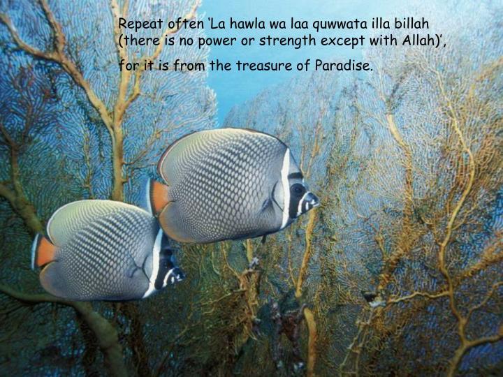 Repeat often 'La hawla wa laa quwwata illa billah (there is no power or strength except with Allah)',