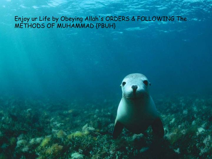 Enjoy ur Life by Obeying Allah's ORDERS & FOLLOWING The METHODS OF MUHAMMAD {PBUH}