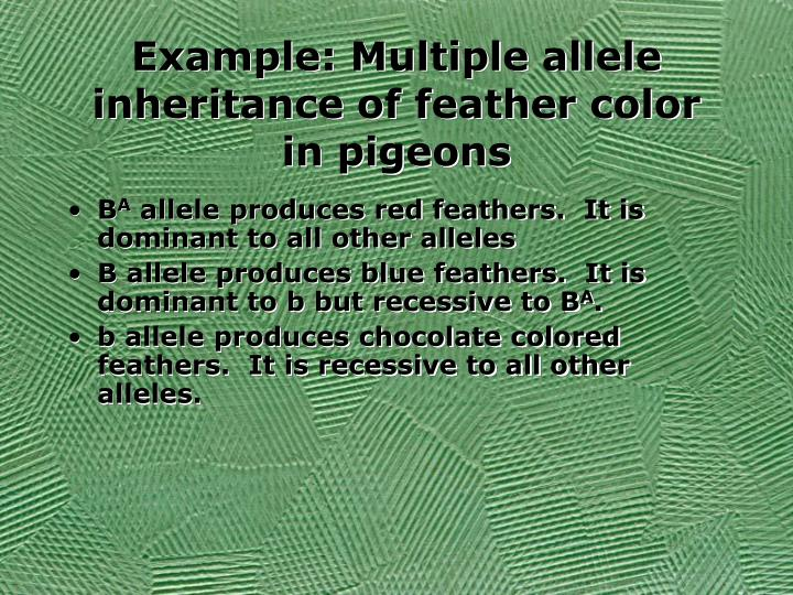 Example: Multiple allele inheritance of feather color in pigeons