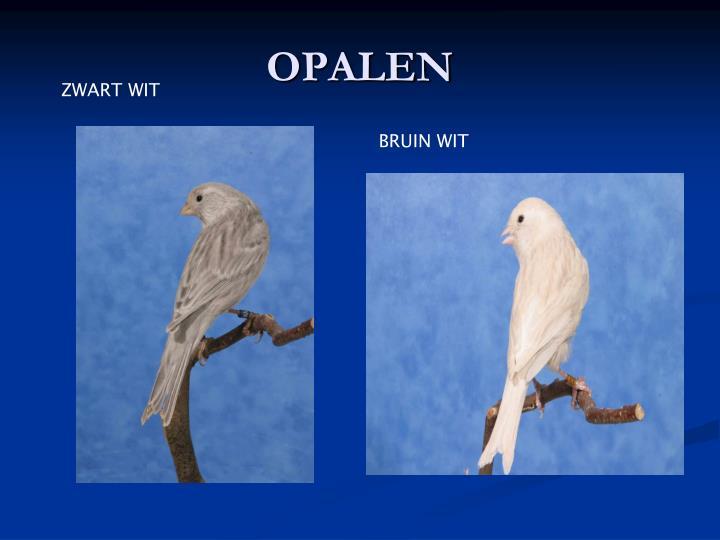 OPALEN