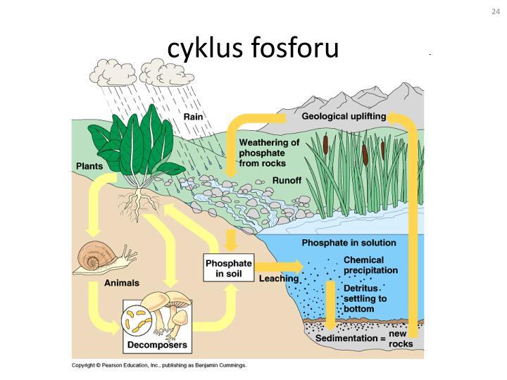 cyklus fosforu