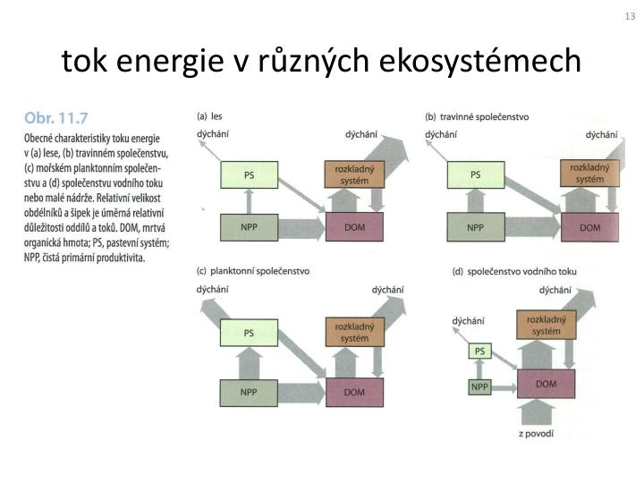 tok energie v různých ekosystémech