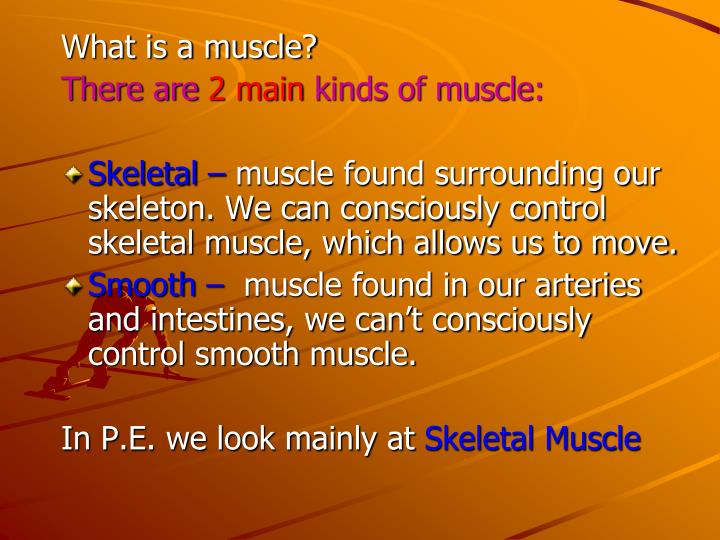What is a muscle?