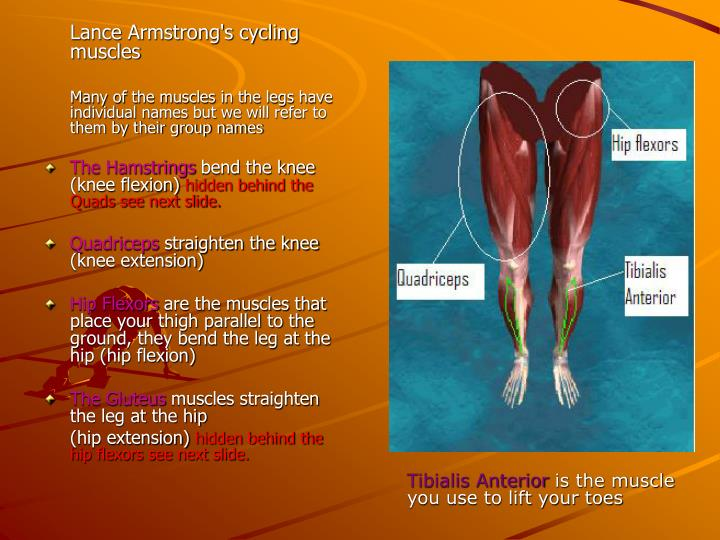 Lance Armstrong's cycling muscles