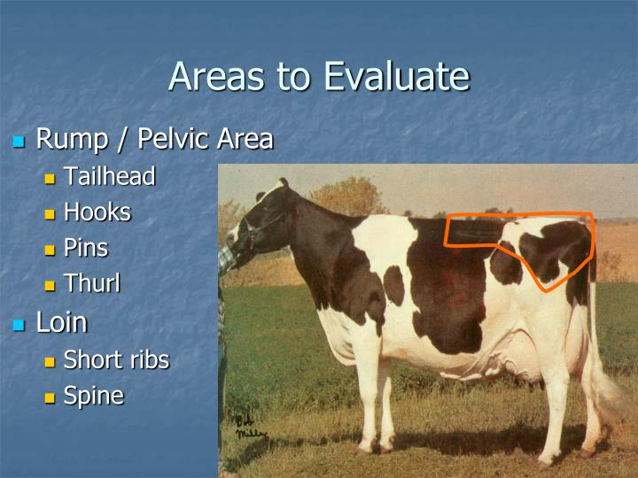 Areas to Evaluate