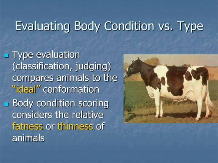 Evaluating Body Condition vs. Type