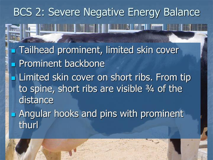 BCS 2: Severe Negative Energy Balance