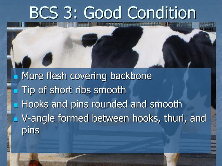 BCS 3: Good Condition