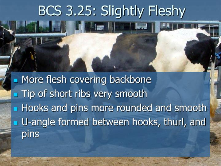 BCS 3.25: Slightly Fleshy