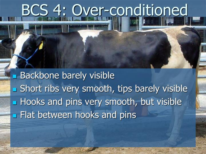 BCS 4: Over-conditioned