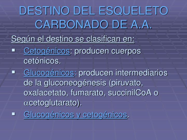 DESTINO DEL ESQUELETO CARBONADO DE A.A.