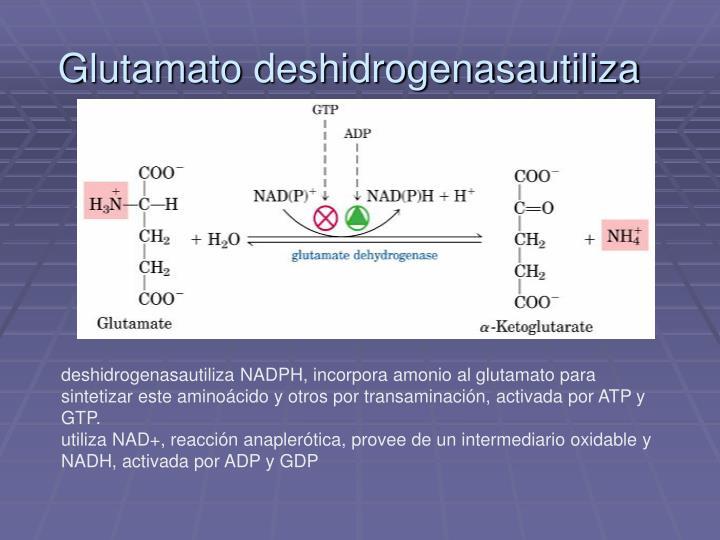 Glutamato deshidrogenasautiliza