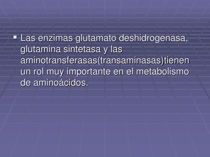 Las enzimas glutamato deshidrogenasa, glutamina