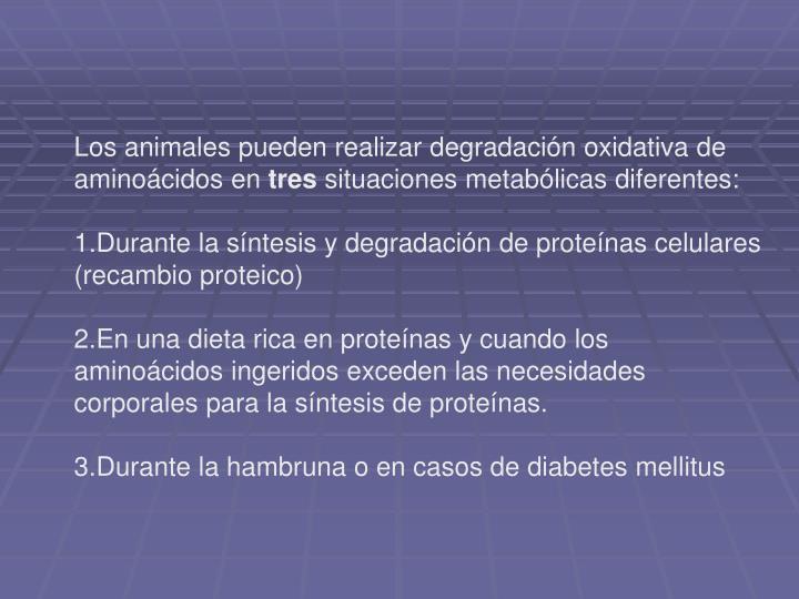 Los animales pueden realizar degradación oxidativa de aminoácidos en