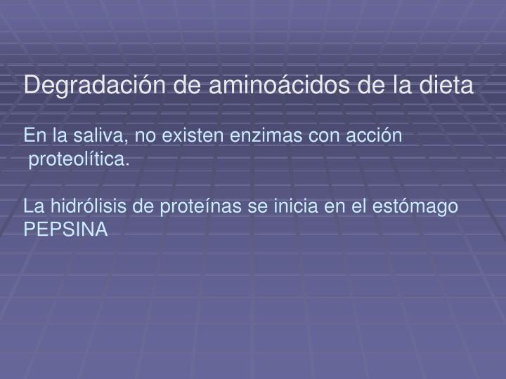Degradación de aminoácidos de la dieta
