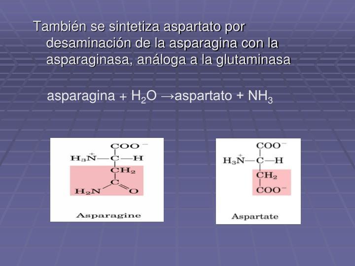 También se sintetiza aspartato por desaminación de la asparagina con la asparaginasa, análoga a la glutaminasa