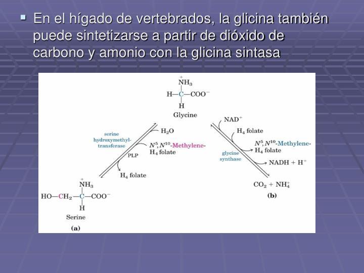 En el hígado de vertebrados, la glicina también puede sintetizarse a partir de dióxido de carbono y amonio con la glicina sintasa