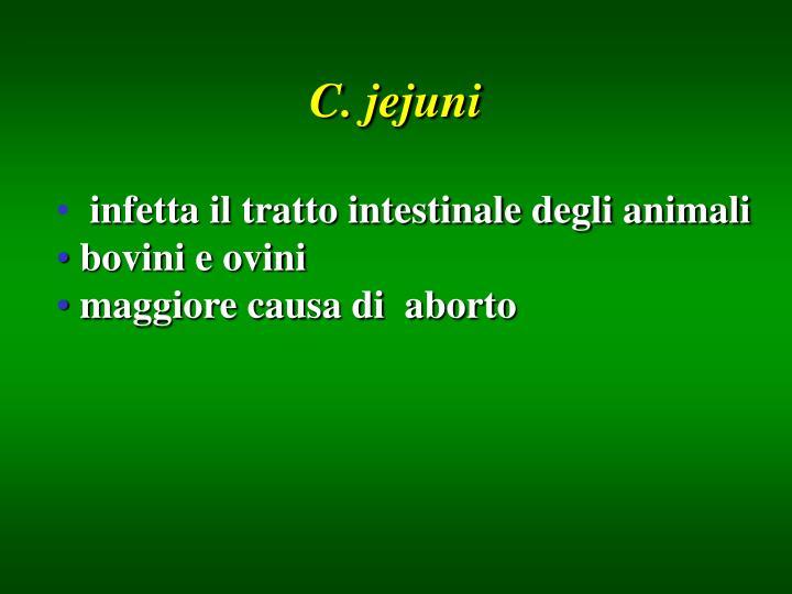 C. jejuni