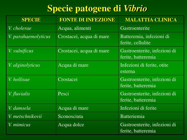 Specie patogene di