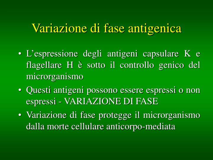 Variazione di fase antigenica